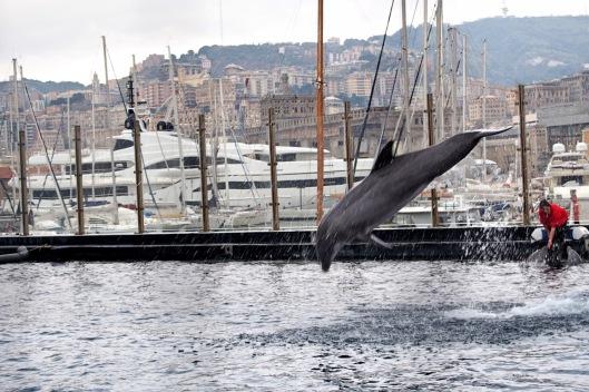 Delfino all'acquario di Genova © Jordan Lessona