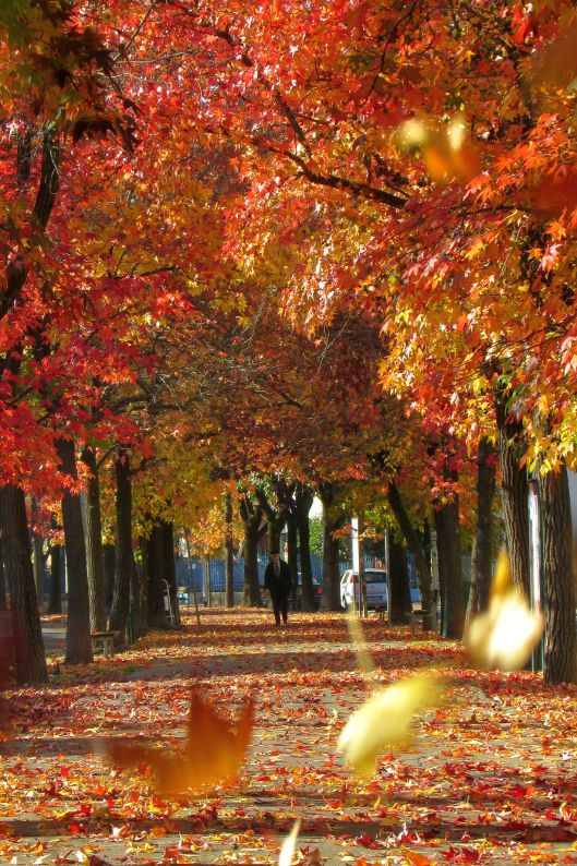 Foliage © Jordan Lessona