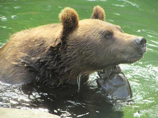 Parco degli Orsi Berna © Jordan Lessona